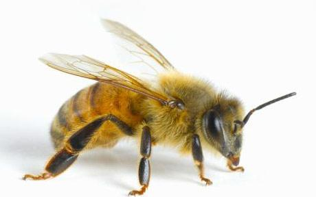 Bee/Wasp Service